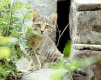 stirra för katt arkivbilder