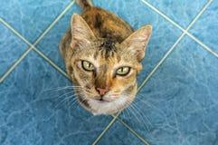Stirrig katt Royaltyfri Foto