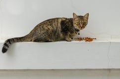 Stirrig katt Fotografering för Bildbyråer
