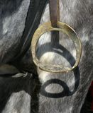 Stirrup1 Images stock