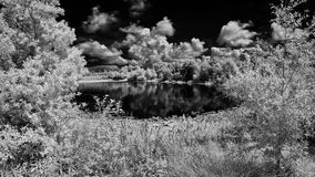 Stitched Infrared Image Of A Florida Park. A stitched infrared image of a Florida park Royalty Free Stock Photography