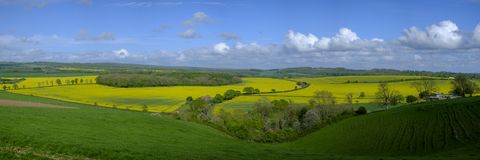Stitched panorama of the Hambledon valley in spring with rapeseed fields in full bloom stock image