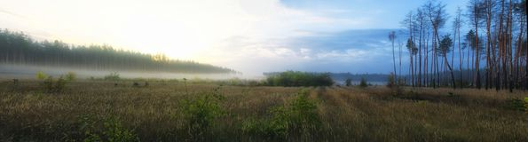 Stitched Panorama. Hanoramic view of early autumn misty pine forest. Early morning, sun is rising. royalty free stock photo