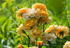 Stitching and simultaneously delicate flowers Royalty Free Stock Image