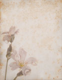 Stitchwort flowers on aged paper background Stock Images