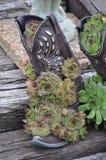 Stivale del cactus Immagine Stock Libera da Diritti