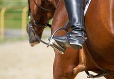 Stivali da equitazione della puleggia tenditrice Immagini Stock