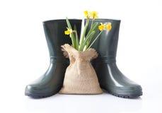 Stivali del giardino e fiori della molla Immagini Stock