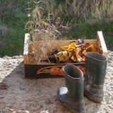 Stivali di gomma e una scatola di foglie di autunno immagine stock libera da diritti
