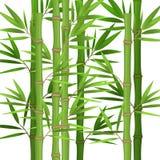 Stjälk av bambu med gröna sidor sänker tema i realistiskt stock illustrationer