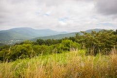 Stjälk av gräs med dimmiga berg i bakgrund Royaltyfria Bilder
