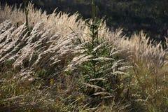 Stjälk av högväxt gräs i skogen Arkivfoton