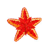 stjärna Royaltyfria Bilder