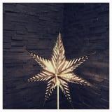 stjärna Royaltyfri Fotografi