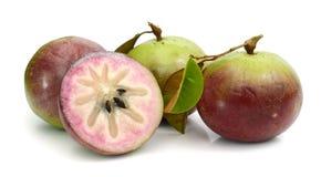 Stjärna Apple, ChrysophyllumCainito royaltyfri foto