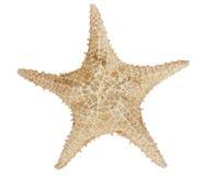 Stjärnafisk Arkivbilder