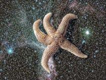 Stjärnafisk Arkivfoton