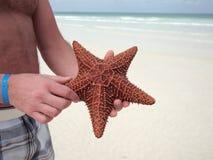Stjärnafisk i mans hand Arkivbild