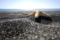 Stjärnafisk i Santorini -2 Arkivbilder
