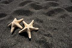 Stjärnafisk i Santorini -3 Arkivfoto