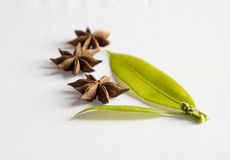 stjärnan för kryddan för kinesisk kokkonst för anisebakgrund använde den indiska white brett Royaltyfria Bilder