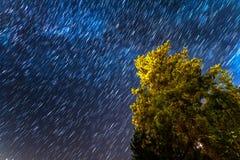 Stjärnan skuggar över ett sörjaträd på de Troodos bergen i Kakope Fotografering för Bildbyråer