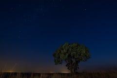 Stjärnascape med ensamt trädbruntgräs och mjukt ljus för Vintergatan Arkivbild