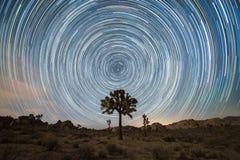 Stjärnaslingor över en Joshua Tree Royaltyfri Foto