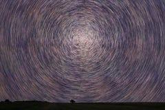 Stjärnaslingor som sparas över med det ensamma trädet Startrails för natthimmel Royaltyfri Foto