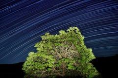 stjärnatrails Royaltyfri Bild