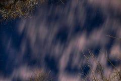 Stjärnklar himmel för natt med moln och filialer av träd Arkivfoton