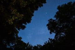 Stjärnklar himmel mot en bakgrund av träd arkivbild