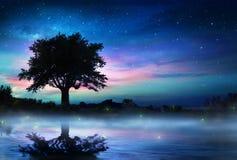 Stjärnklar natt med det ensamma trädet fotografering för bildbyråer