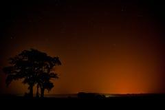 Stjärnklar natt med ett träd Royaltyfri Foto