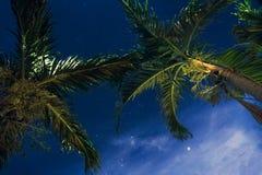 Stjärnljusnatt över palmträd Arkivfoto