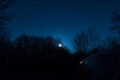 Stjärnor över skogen Arkivbilder