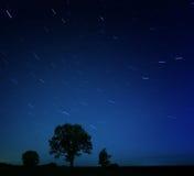 Stjärnor för ensamt träd för natt fallande Royaltyfri Bild
