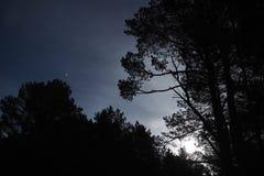 Stjärnor för måneljus och blåa moln över nattskog royaltyfri foto