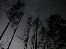 Stjärnor för natthimmel över skog Fotografering för Bildbyråer
