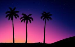 stjärnor för nattsky Palmträd på solnedgång Fotografering för Bildbyråer