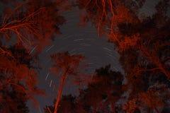 Stjärnor i en cirkel Royaltyfria Bilder