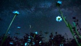 Stjärnor i himlen på den djupa natten i en kamomillträdgård 2 stock video