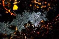 Stjärnor i himlen på natten över träd Royaltyfri Bild