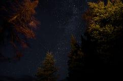 Stjärnor i skogen royaltyfri foto