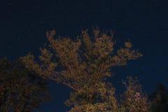 Stjärnor i skogen Arkivbild