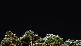 Stjärnor korsar himlen över vinterskogen 4K lager videofilmer