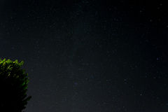 Stjärnor med mjölkar Arkivfoton