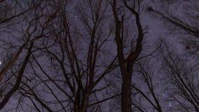 Stjärnor som snurrar på natten med trädet stock video