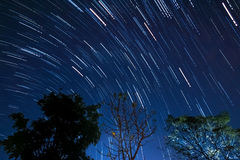 Stjärnan vinkar Royaltyfria Bilder