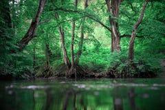 ?stlig liggande f?r Europa skoggreen arkivfoto